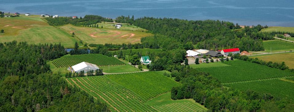 Jost vineyard wedding