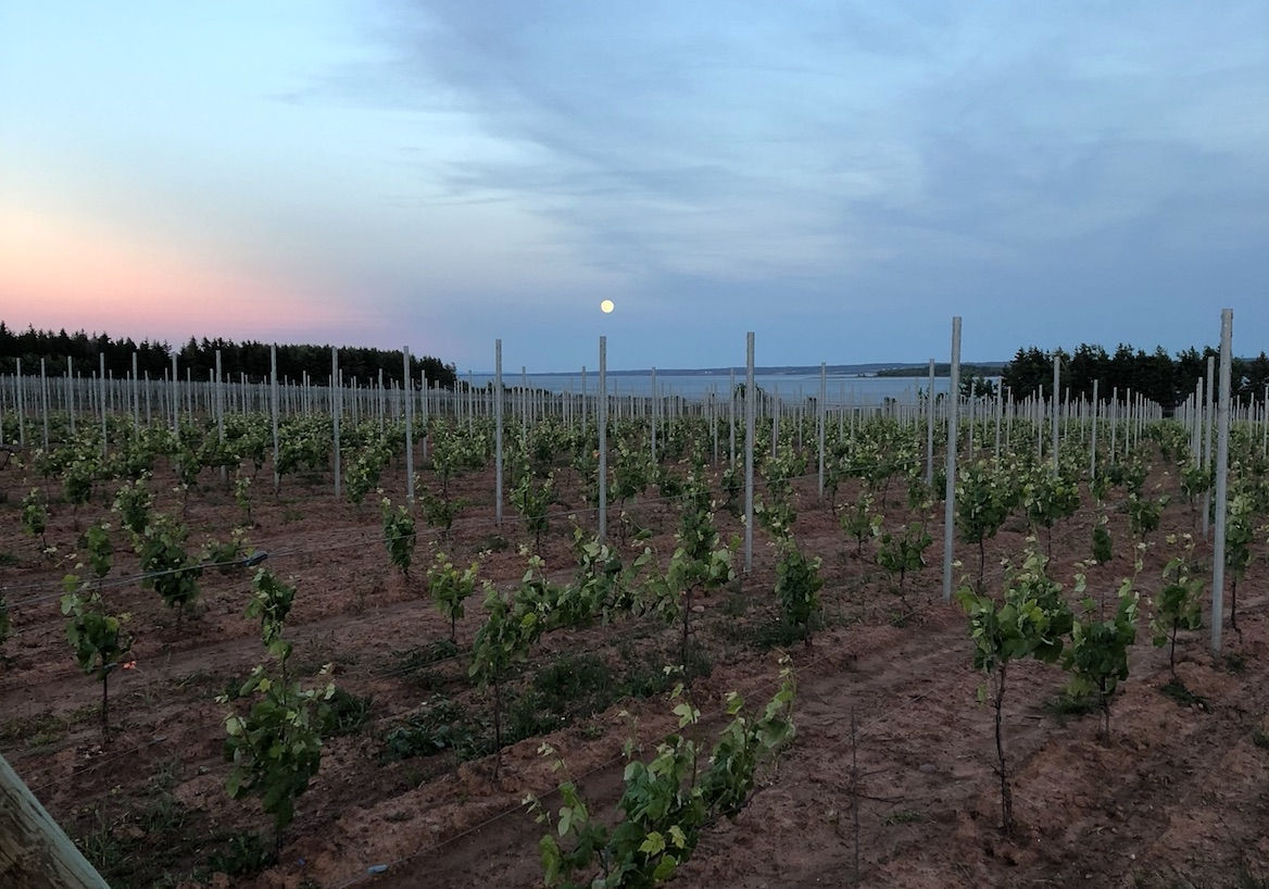 Lessons from Starting a Vineyard in Nova Scotia